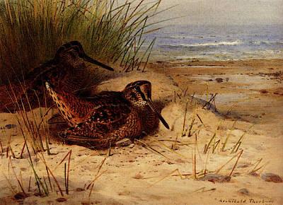 Woodcock Digital Art - Thornburn Archibald Woodcock Nesting On A Beach by PixBreak Art