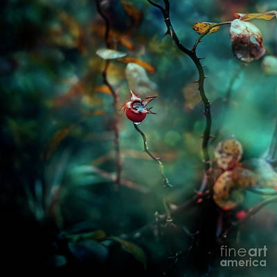 Photograph - Thorns by Agnieszka Mlicka