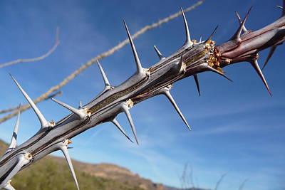 Art Print featuring the photograph Thorns Along The Apache Trail by Joel Deutsch