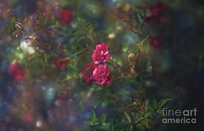 Thorns And Roses II Art Print