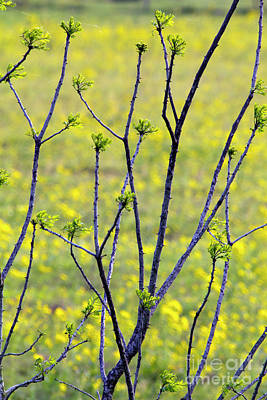 Photograph - Thorns In Spring Green by Alycia Christine