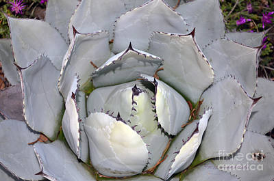 Photograph - Cactus Patterns  by Afroditi Katsikis