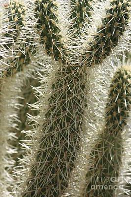 Thorny Cactus Print by Carol Groenen