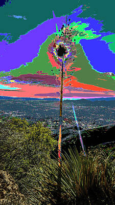 Photograph - Thorny Yucca And Sun Kisses by Kenneth James
