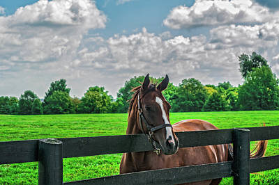 Photograph - Thoroughbred by Barry Fowler