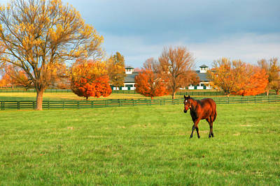 Photograph - Thoroughbred In Fall by Sam Davis Johnson