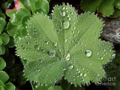 Photograph - Thousand And One Droplets .5 by Kim Tran