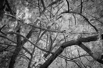 Those Branches -  Art Print