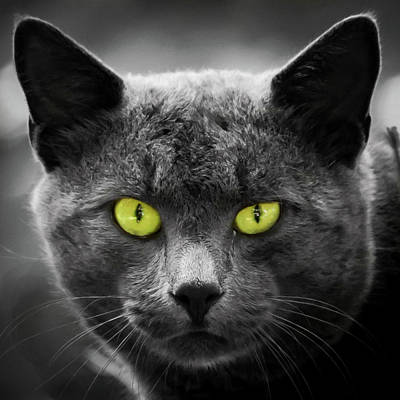 Photograph - Those Eyes Cat Square by Terry DeLuco
