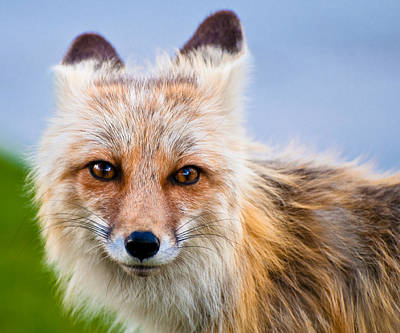 Photograph - Those Eyes by Gary Lengyel