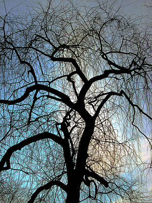 Guy Ricketts And Art Photograph - Those Gnarled Branches by Guy Ricketts