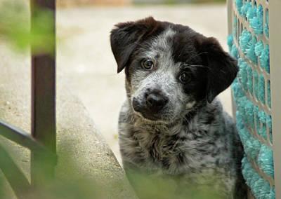 Photograph - Those Sad Puppy Eyes by John De Bord