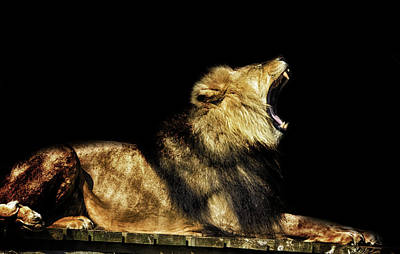 Animals Royalty-Free and Rights-Managed Images - Those Teeth by Martin Newman
