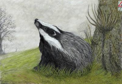 Charcoal Mixed Media - Thou Shalt Not Cull by Philip Harvey