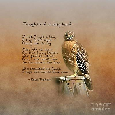 Photograph - Thoughts Of A Baby Hawk by Renee Trenholm