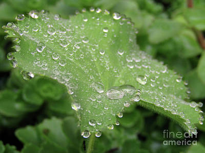 Photograph - Thousand And One Droplets. 2 by Kim Tran
