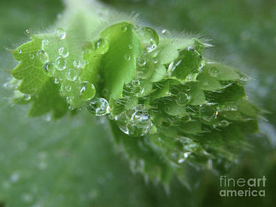 Photograph - Thousand And One Droplets, 3 by Kim Tran