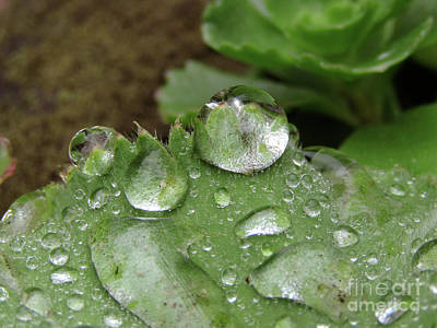 Photograph - Thousand And One Droplets. 4 by Kim Tran