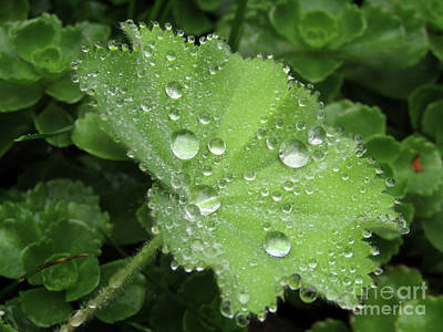 Photograph - Thousand And One Droplets by Kim Tran