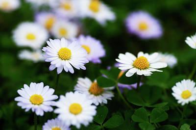 Photograph - Thousend Flowers 2 by Pedro Cardona