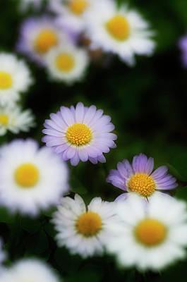 Photograph - Thousend Flowers 3 by Pedro Cardona