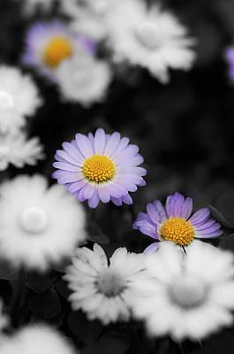 Photograph - Thousend Flowers 5 by Pedro Cardona