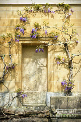 Floribunda Photograph - Threads Of Wisteria by Tim Gainey