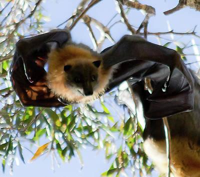 Photograph - Threatened Species... by Miroslava Jurcik