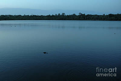 Photograph - Three Alligators by Kathi Shotwell