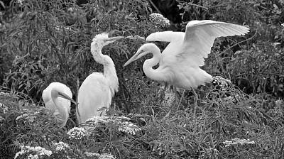 Photograph - Three Amigos Black And White by Carol Bradley