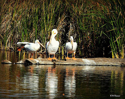 Photograph - Three Amigos On A Log by Kathy M Krause