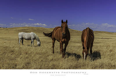 Photograph - Three Amigos by PhotoWorks By Don Hoekwater