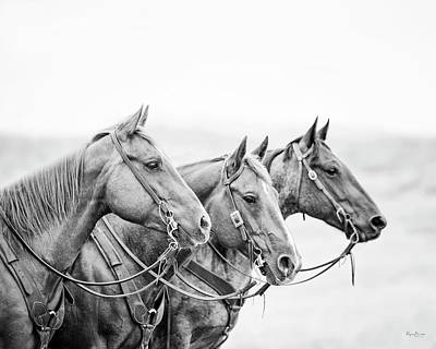 Photograph - Three Amigos by Phyllis Burchett
