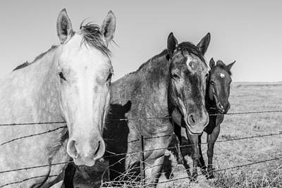 Photograph - Three Amigos by SR Green