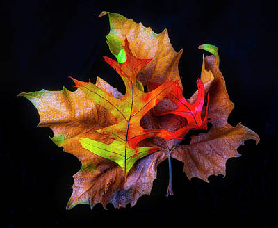 Photograph - Three Autumn Leaves by Garry Gay
