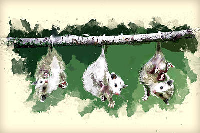 Marsupial Painting - Three Baby Possums Hanging By Their Tails by Elaine Plesser
