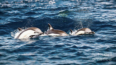 Photograph - Three Beautiful Dolphins by Anna Om