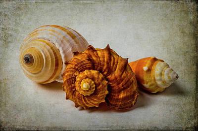 Photograph - Three Beautiful Seashells by Garry Gay
