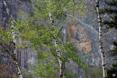Photograph - Three Birches At Kineo by John Meader