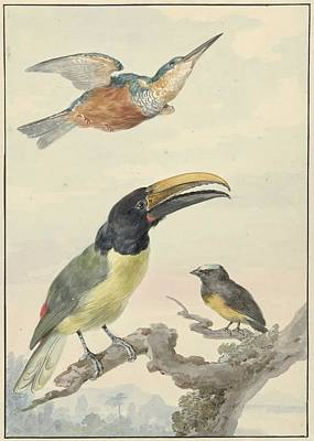 Comedian Drawings - Three birds a Kingfisher, a Prince of Wieds Toucan and an Organist, Aert Schouman, 1720 - 1792 g by Aert Schouman
