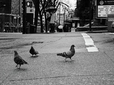 Photograph - Three Birds  by The Artist Project