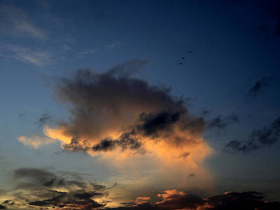 Photograph - Three Birds In The Sky by Charles McKelroy