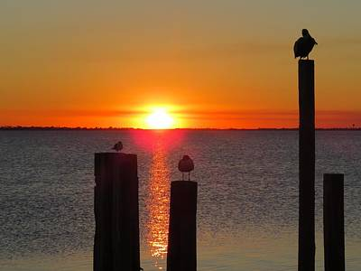 Photograph - Three Birds In The Sunset by Keith Stokes