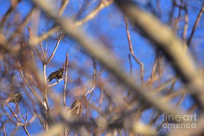 Photograph - Three Birds Of Winter by Angela J Wright