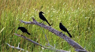 Photograph - Three Black Birds by Cynthia Guinn