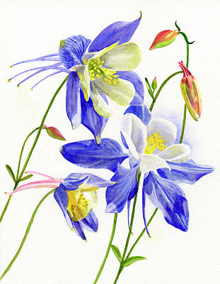 Three Blue Columbine Blossoms Original by Sharon Freeman