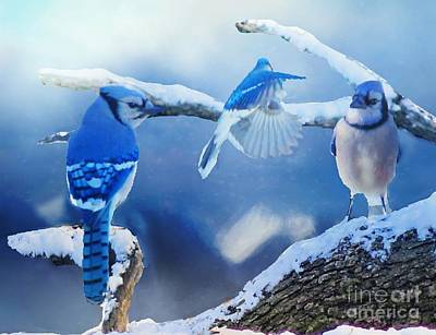 Photograph - Three Bluejays In Winter by Janette Boyd