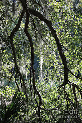 Photograph - Three Branches Over Florida Pond by Carol Groenen