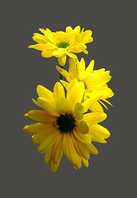 Photograph - Three Bright Yellow Daisies by Susan Savad