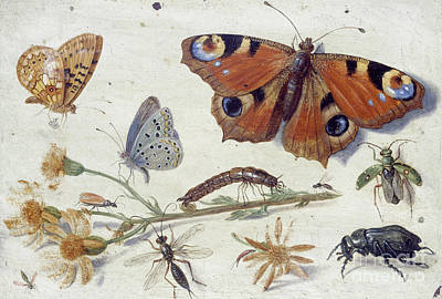 Nature Study Painting - Three Butterflies, A Beetle And Other Insects, With A Cutting Of Ragwort  by Jan Van Kessel